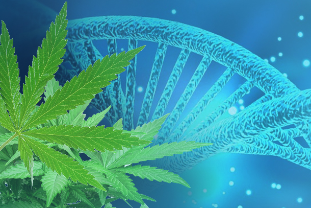 Global Conference on Medical Cannabis and Cannabidiol 2021
