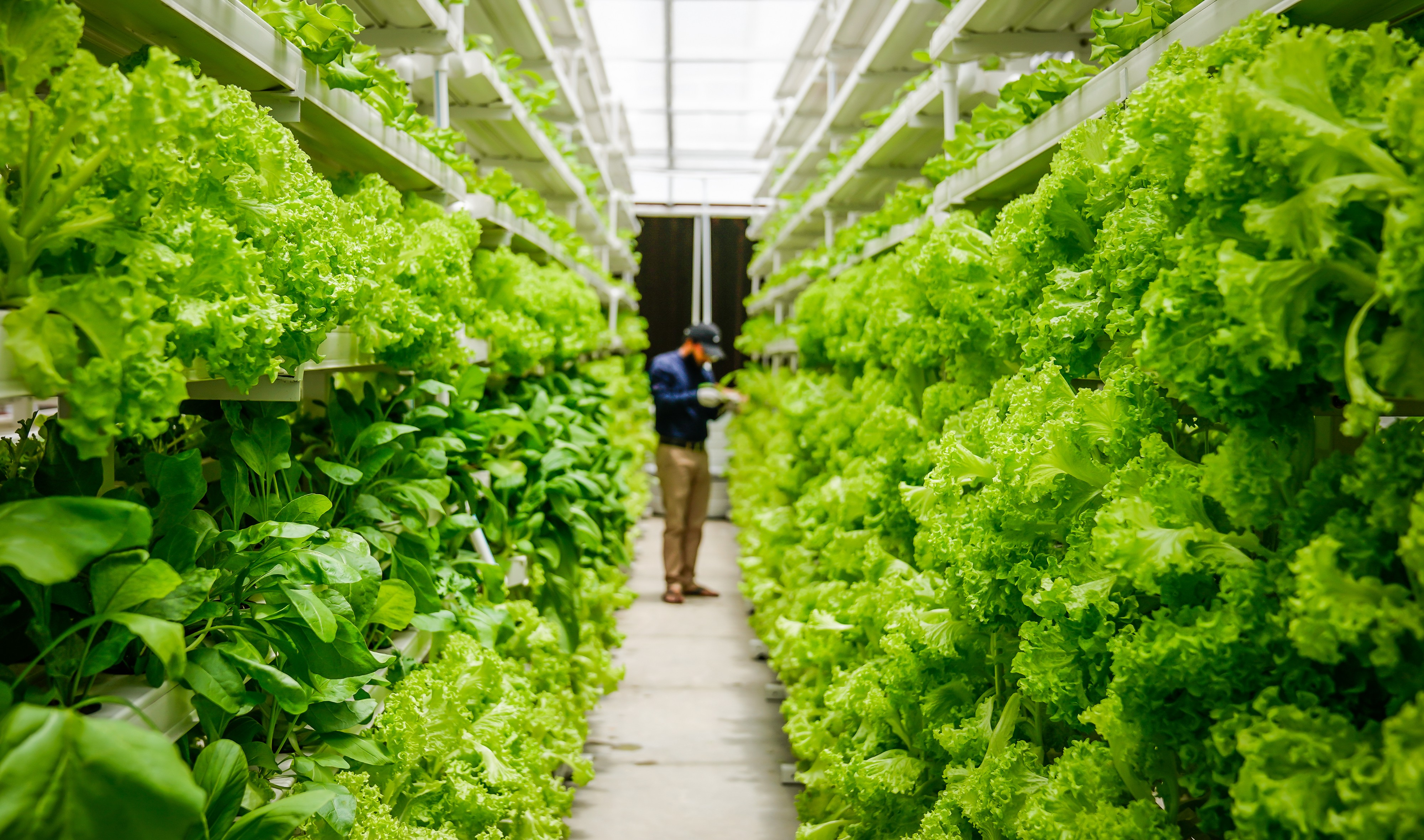 COVID-19 Impact on Vertical Farming in Semiconductors and Electronics Industry