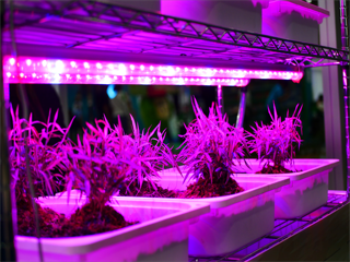 COVID-19 Impact on Grow Light in Semiconductors and Electronics Industry